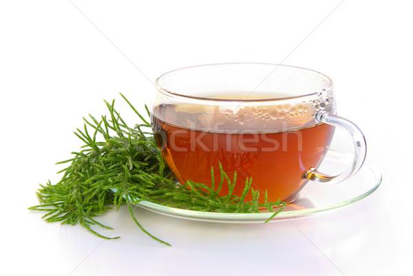 tea field horsetail 01 Stock photo © LianeM