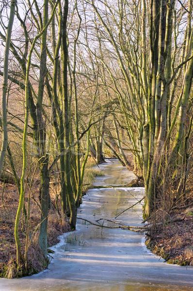 Spree Forest in winter 01 Stock photo © LianeM