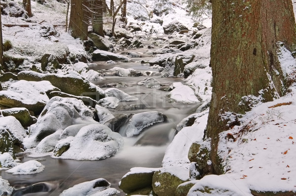 creek in the Mountains in winter Stock photo © LianeM