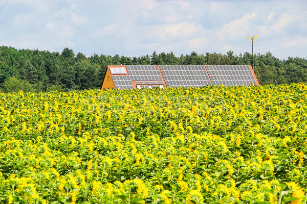 sunflower field and solar plant 02 Stock photo © LianeM
