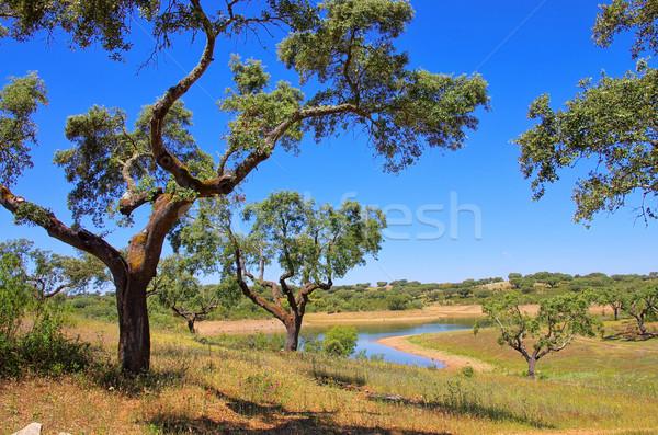 cork oak 58 Stock photo © LianeM