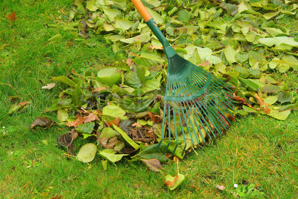 Yaprakları tırmık ev çim çalışmak ev Stok fotoğraf © LianeM