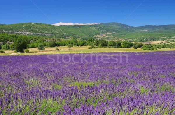 26 céu flor natureza beleza campo Foto stock © LianeM