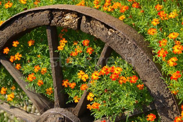 13 背景 夏 オレンジ 緑 金 ストックフォト © LianeM