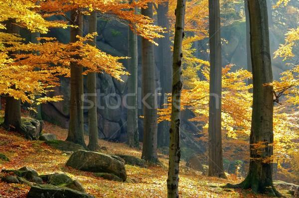 rock in beech forest  Stock photo © LianeM