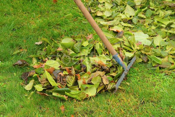 листьев грабли дома трава работу домой Сток-фото © LianeM