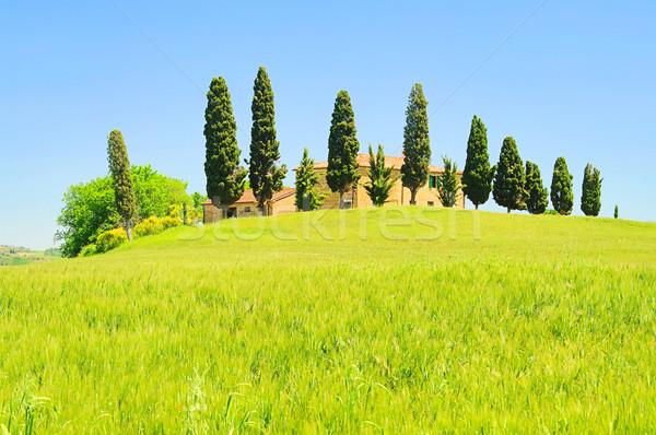 дома дерево весны области зеленый луговой Сток-фото © LianeM