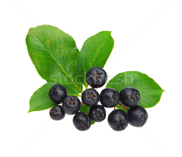 chokeberry 06 Stock photo © LianeM