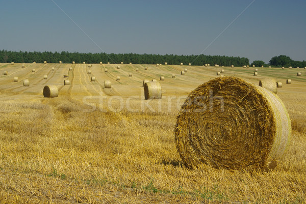 bale of straw 12 Stock photo © LianeM