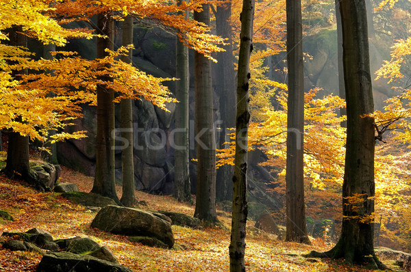 rock in beech forest 03 Stock photo © LianeM