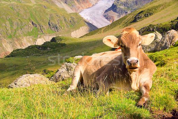 Vaca 22 grama neve verão verde Foto stock © LianeM