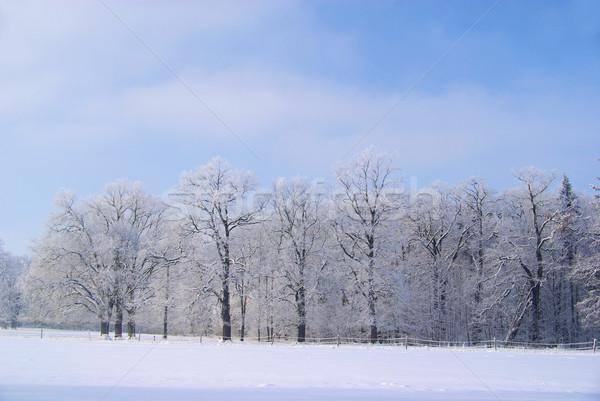 Forestales invierno 17 campo Foto stock © LianeM