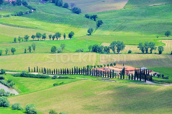 40 ház fa tavasz út mező Stock fotó © LianeM