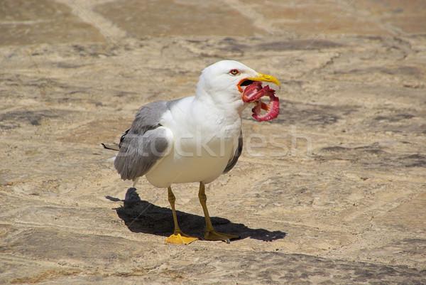 gull with fish 09 Stock photo © LianeM