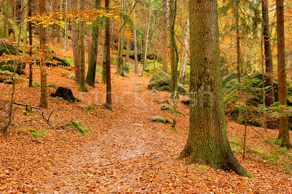 砂岩 岩 森林 風景 葉 山 ストックフォト © LianeM