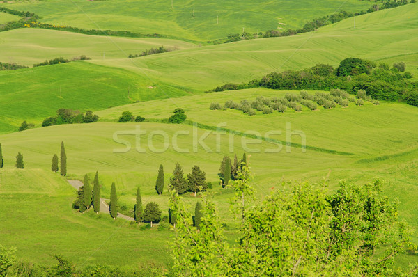 Toscane collines arbre printemps route nature Photo stock © LianeM