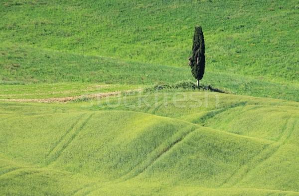 Toskana alan ağaç bahar doğa Stok fotoğraf © LianeM