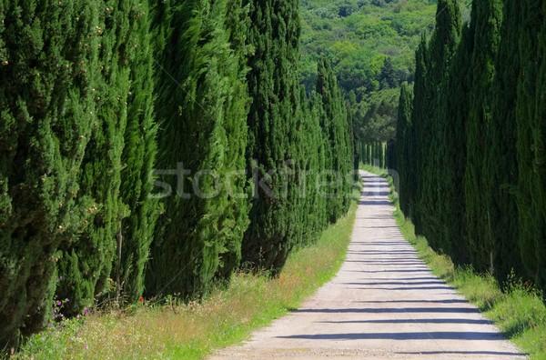 サイプレス 22 風景 木 緑 トラック ストックフォト © LianeM