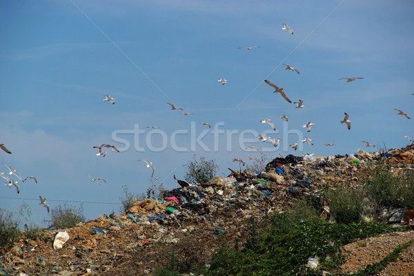 garbage dump 08 Stock photo © LianeM
