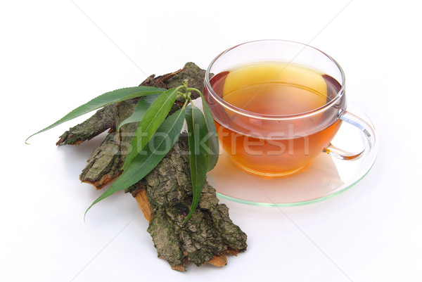 Stock photo: tea willow 03