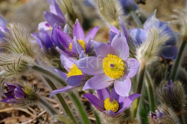 Fiore 17 natura bellezza verde impianto Foto d'archivio © LianeM