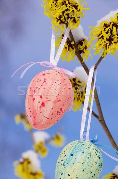 Krzew Wielkanoc czasu 12 kwiat śniegu Zdjęcia stock © LianeM