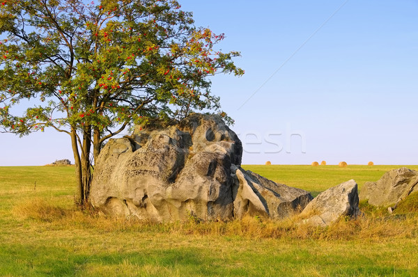 Stock photo: Stolowe Mountains savanna in Silesia