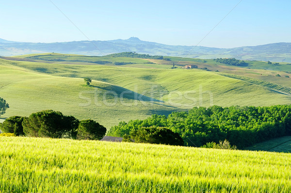 Toscana colinas árbol primavera naturaleza paisaje Foto stock © LianeM
