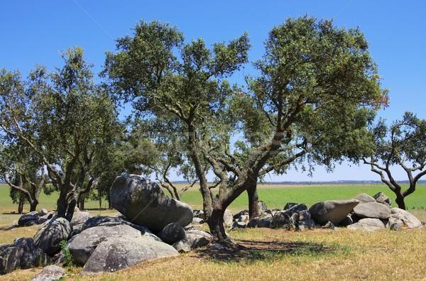 Megalith and Holly Oak 01 Stock photo © LianeM