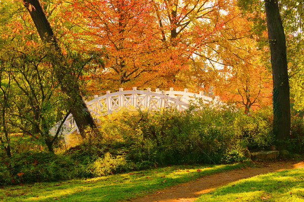 английский белый моста дерево лист саду Сток-фото © LianeM