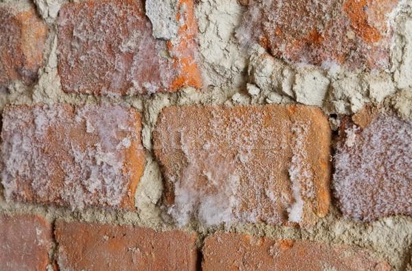 Muur paddestoel textuur achtergrond Stockfoto © LianeM