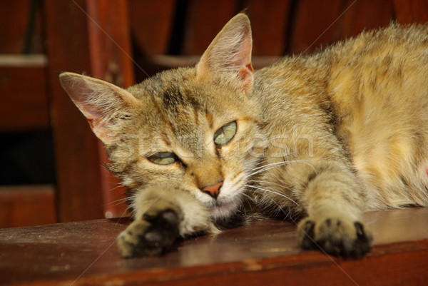 Foto stock: Gato · 17 · olho · pele · cabeça · bichano