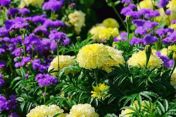 26 natura verde blu oro impianto Foto d'archivio © LianeM