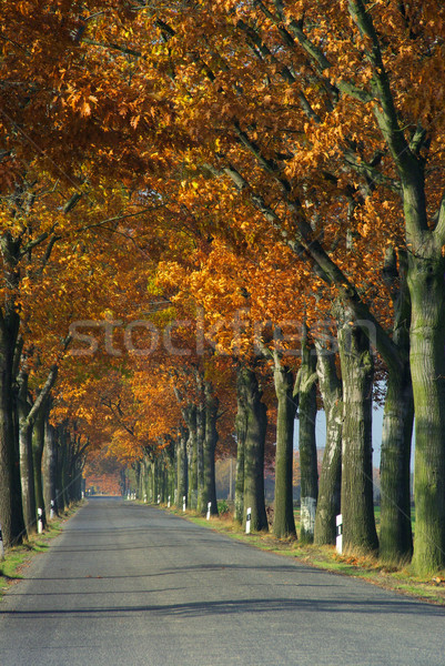 avenue in fall 14 Stock photo © LianeM