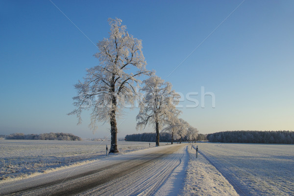 hoarfrost road 01 Stock photo © LianeM