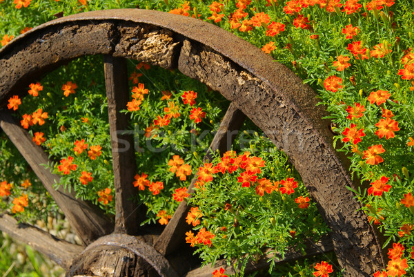 14 achtergrond zomer oranje groene goud Stockfoto © LianeM