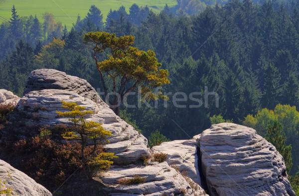 Montana 12 árbol forestales paisaje mesa Foto stock © LianeM