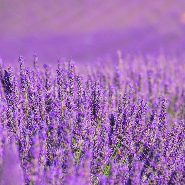 14 çiçekler güzellik yaz alan Stok fotoğraf © LianeM