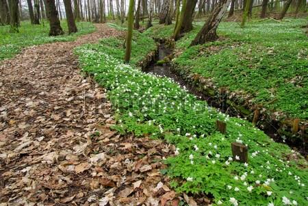 13 voorjaar bos groene rivier plant Stockfoto © LianeM