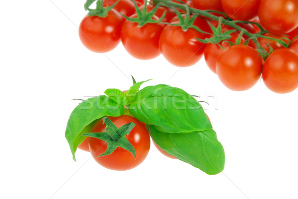 Tomate basilic 17 couleur usine plantes Photo stock © LianeM