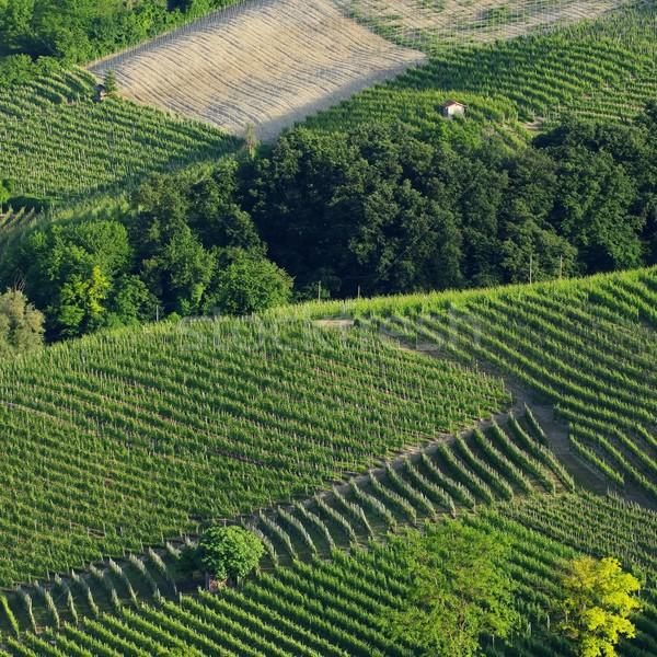 langhe vineyards  Stock photo © LianeM