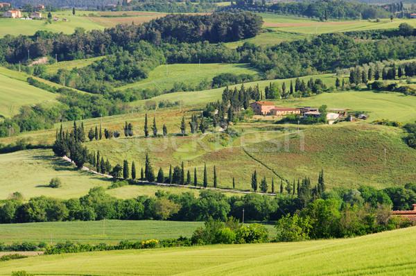 サイプレス 曲線 ツリー 草 自然 フィールド ストックフォト © LianeM