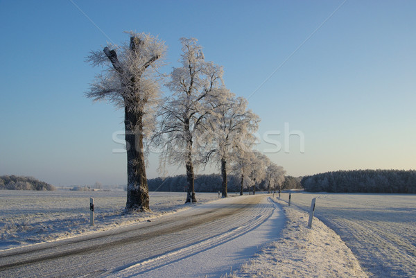 hoarfrost road 04 Stock photo © LianeM