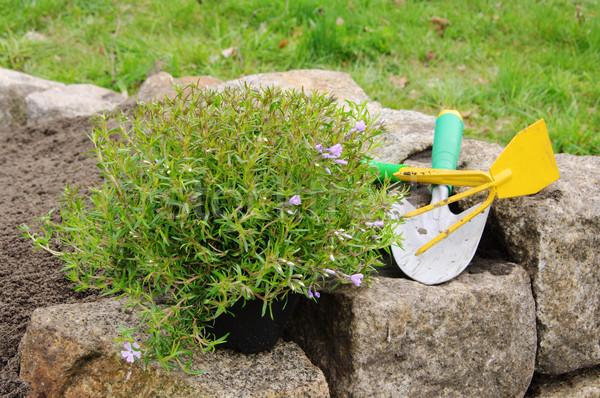 Arbusto fiore foglia giardino verde Foto d'archivio © LianeM