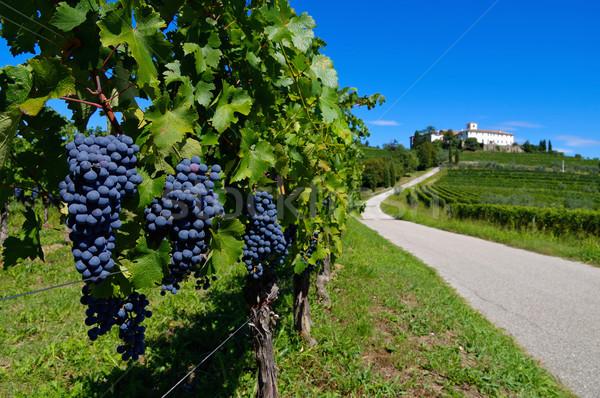Opactwo Włochy charakter zielone jesienią Zdjęcia stock © LianeM