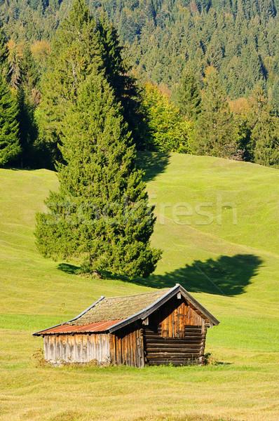 19 égbolt fű erdő természet otthon Stock fotó © LianeM