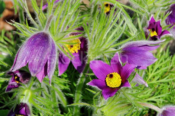 Bloem 13 natuur schoonheid groene plant Stockfoto © LianeM