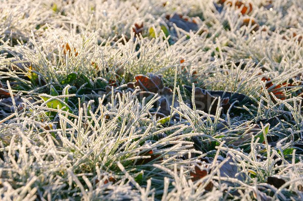 meadow and hoarfrost 01 Stock photo © LianeM