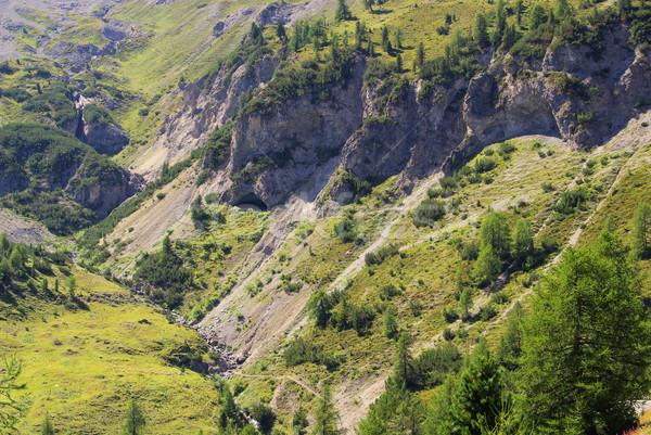 Alpen 14 boom bos berg Blauw Stockfoto © LianeM