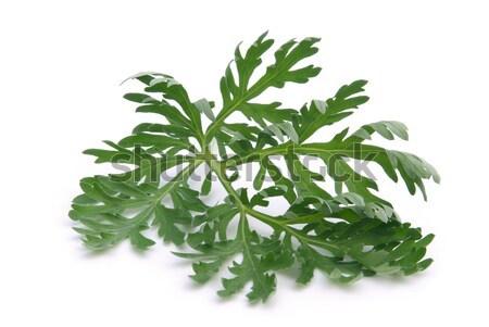 Háttér fehér izolált szárított növénygyűjtemény gally gyógyászati Stock fotó © LianeM